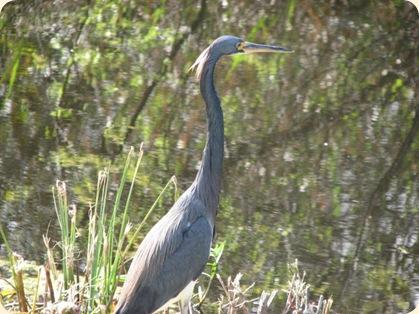 Everglades Highway 034