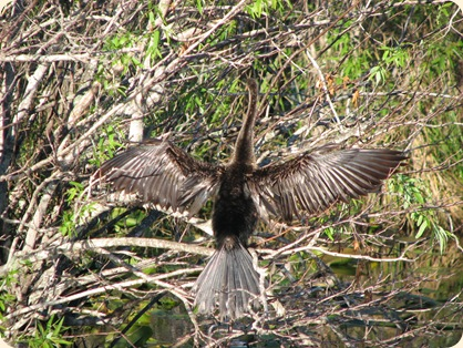 Everglades NP 094