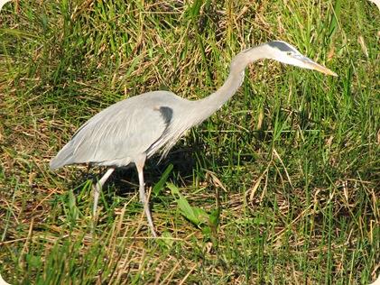 Everglades NP 107
