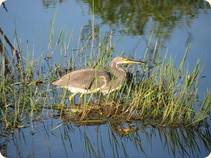 Everglades NP 143