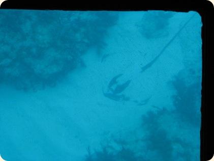 John Pennekamp Glass Bottom Boat 020