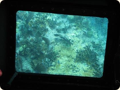 John Pennekamp Glass Bottom Boat 033