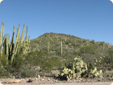 Organ Pipe National Park 030