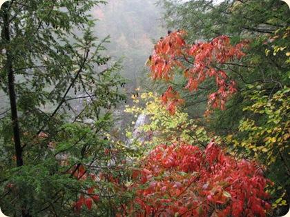 Fall Creek Falls SP 089