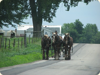 Elkhart Amish Area - 2010 010