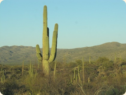 Saguaro National Park 074