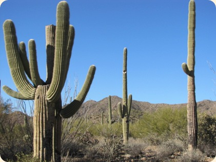 Saguaro National Park 008