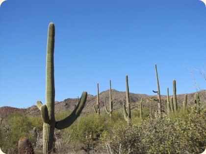 Saguaro National Park 009