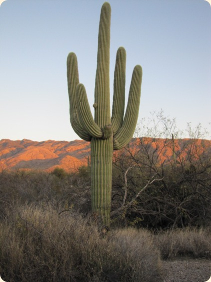 Saguaro National Park 097