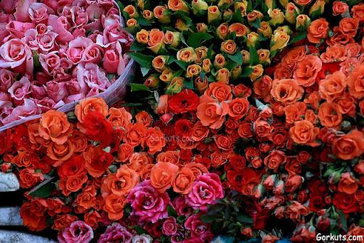 roses,Orkut rose Scrap