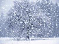 Snow Spells Cover