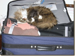Ranger Suitcase