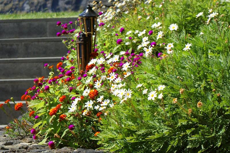 Açores em flor