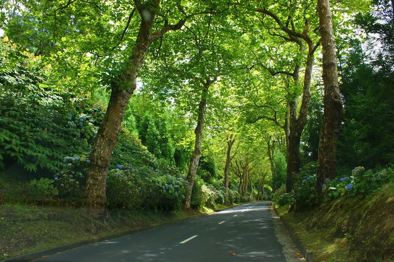 Estrada entre as árvores