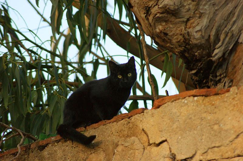 Gato no Jardim da Algodeia