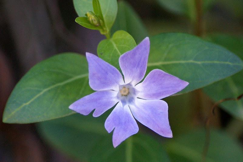 Flor na Arrábida
