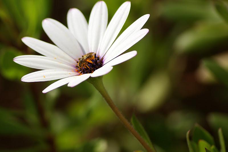 Flor, insecto, macro
