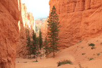 BryceCanyonNP_20100818_0339.JPG Photo