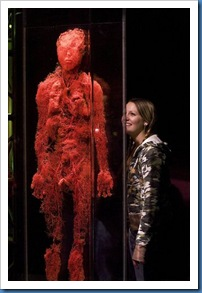 bodies-revealed-blood-vessels