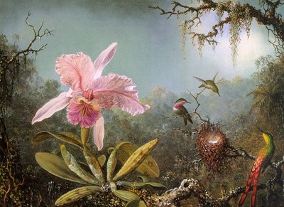 Cattelya-Orchid-and-Three-Brazilian-Hummingbirds-1871