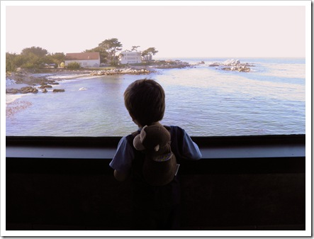 papi overlooking the ocean