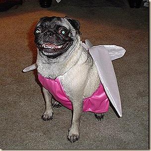 Fairy Gidget