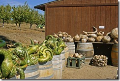 Gourds,-green-and-dried