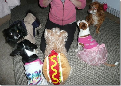 dogs dressed up2