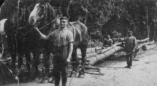 Dit is een foto van Albert aan de paarden die een