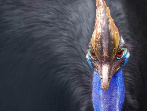 أخطر طائر جماله
