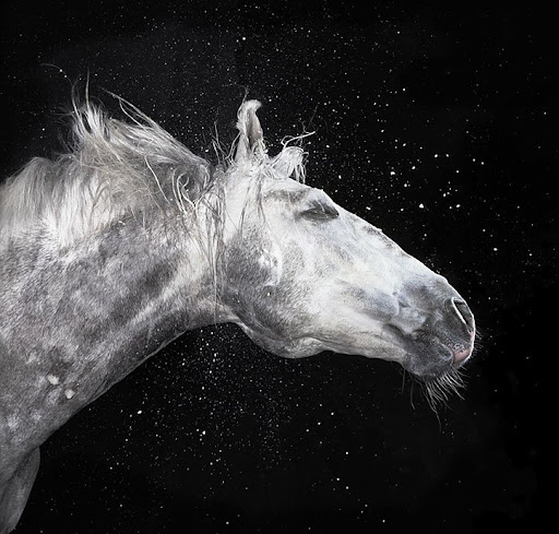 من أجمل صور الخيول