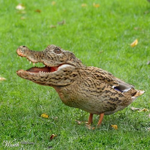Duckstin's Photo
