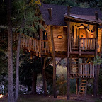 Tree House 3.jpg