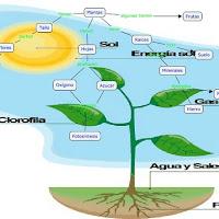 Las_Plantas_y_sus_partes.jpg