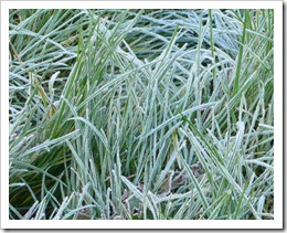 garching morning frost 2009-10-20 001