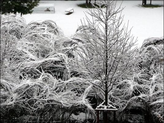 snow 2009-12-12 004