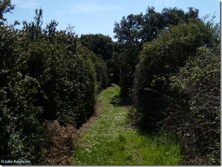 Pasillo de vegetación - ruta de las encinas de Olóriz