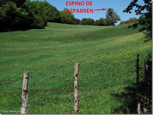Ubicación del espino de Azparre - monumento natural
