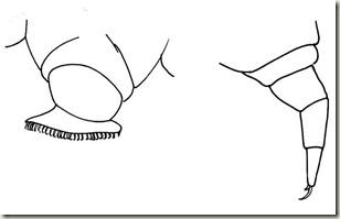 butterfly-caterpillar-legs-big