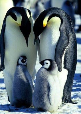 [MarchOfThe Penguins[4].jpg]