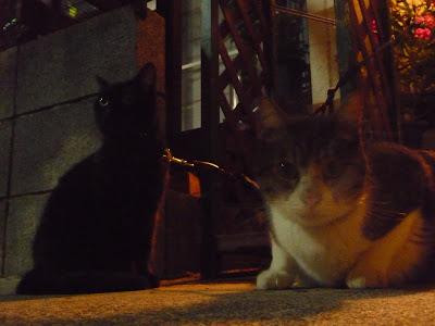 gatos conocidos