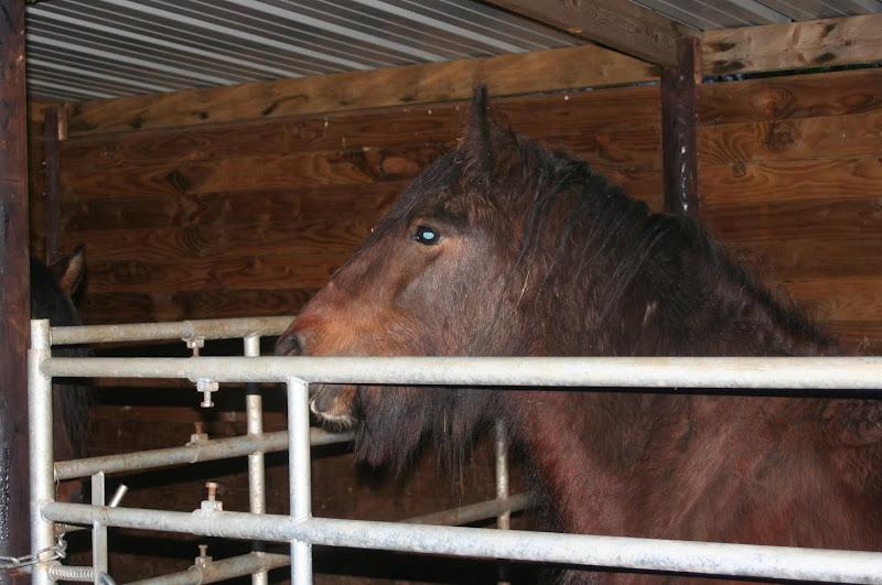 Tonkas Boy! fils de Tonka et petit fils de Lottery horse : news p.8!!! IMG_8927