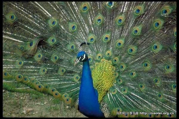 """世界各国确定""""国鸟""""的重大意义 - 陈明远 - 陈明远的博客"""