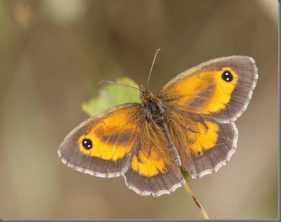 10_07_20_cliffe_002_gatekeeper