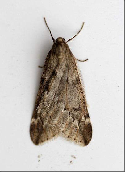 11_04_03_moths_034