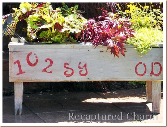 address planter 020b