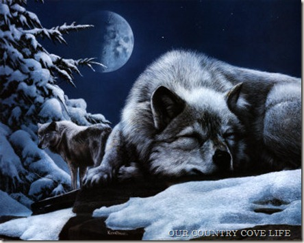 KD0804~Sleeping-Wolf-and-Lookout-Posters