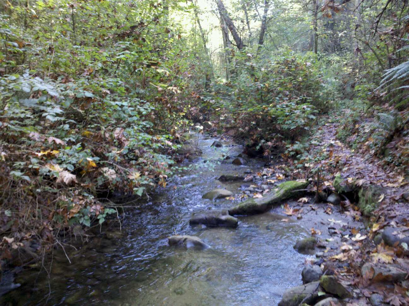 Primrose Trail
