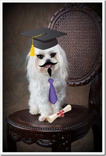 snowy grad