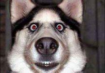 komik köpek resmi